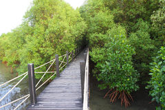 Wooden bridge in the mangrove forest Stock Images