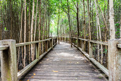 A wooden bridge on mangrove forest Royalty Free Stock Photography