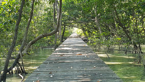 Wooden bridge through mangrove forest Stock Photography