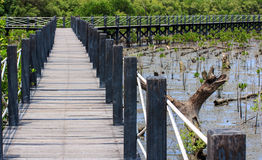 Wooden Bridge In Mangrove Forest Royalty Free Stock Images