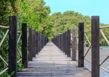 Wooden Bridge In Mangrove Forest Royalty Free Stock Photo