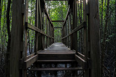 Wooden bridge in the mangrove forest. Old wooden bridge in the mangrove forest Royalty Free Stock Photos