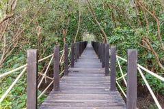 Wooden bridge in mangrove forest. Rhizophora Royalty Free Stock Photos