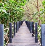 Wooden bridge in mangrove forest. Rhizophora Royalty Free Stock Photo