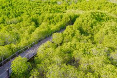 Wooden bridge in mangrove forest. Romantic place Stock Photo