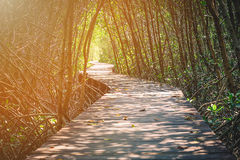 Wooden Bridge In Mangrove Forest Stock Images