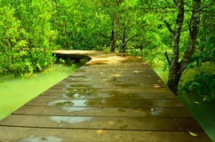 Wooden bridge in mangrove forest. Thailand stock images