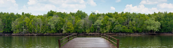 Wooden bridge at mangrove forest Royalty Free Stock Image
