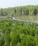 Wooden bridge in mangrove forest Stock Photos