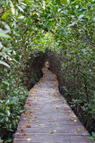 Wooden bridge through the mangrove reforestation Royalty Free Stock Photo