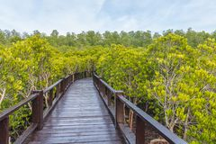 A wooden bridge in the middle of a mangrove forest with beautiful sky royalty free stock photos
