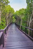 A wooden bridge in the middle of a mangrove forest with beautiful sky royalty free stock image