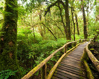 Wooden bridge at misty tropical rain forest. Doi Inthanon Park, Thailand Stock Photo