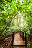Wooden bridge at misty tropical rain forest. Doi Inthanon Park, Thailand Royalty Free Stock Photos
