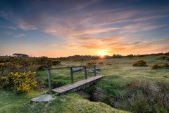 A Wooden Bridge on the Moor Royalty Free Stock Photos
