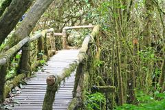 Wooden bridge with moss in Ang ka nature trail at doi inthanon National park Chiang Mai,Thailand stock image