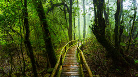 Wooden bridge with moss in natural park under rain Stock Photo