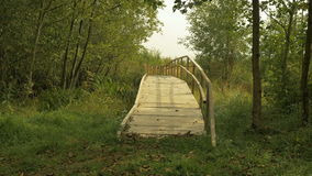 Wooden bridge in the national wildlife swamp reserve stock video footage