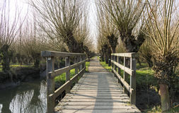 Wooden bridge in nature with willows Stock Images