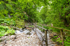 Wooden bridge over brook in a forest Stock Image