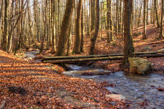 Wooden Bridge Over Brook Trout Stock Photography