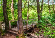 Wooden bridge over the forest brook. Lovely countryside nature scenery in summertime Royalty Free Stock Photos