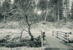 Wooden bridge over frozen stream Royalty Free Stock Images