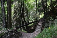 Wooden bridge. Over a mountain bet. Mountain ridge and mixed evergreen and deciduous royalty free stock photos