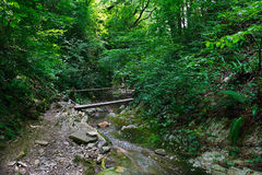 Wooden bridge over a mountain creek in forest Royalty Free Stock Image