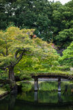 Wooden bridge over the pond green maple trees Royalty Free Stock Image
