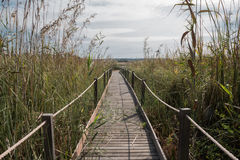 Wooden bridge over the reeds Stock Images