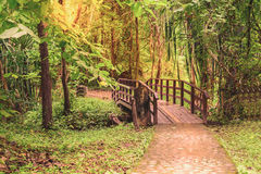 Wooden bridge over rill forest in national park Stock Image
