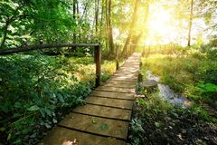Wooden bridge over the river in the forest. Against the background of bright sun Stock Photos