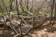 Wooden bridge over the river in the forest Stock Photo