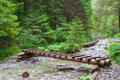Wooden bridge over the river. In the spruce forest stock photo