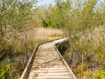 Wooden bridge over a river. Wooden bridge between trees and on the arm of a river Stock Photography
