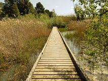 Wooden bridge over a river. Wooden bridge between trees and on the arm of a river Stock Image