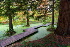 Wooden Bridge over small pond, Bochum, Germany Royalty Free Stock Photo