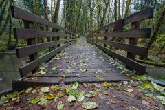 Wooden bridge over the stream in the forest stock images