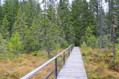 Bridge over a swamp in the forest. Wooden bridge over a swamp in the forest Stock Images