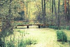 Wooden bridge over swamp in forest. Autumn scene of wooden bridge over swamp in forest Stock Photos