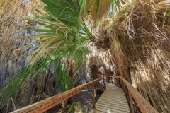 Wooden bridge and Palm trees Stock Photography