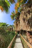 Wooden bridge and Palm trees Stock Image