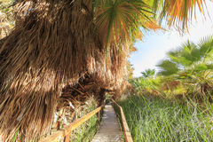 Wooden bridge and Palm trees Royalty Free Stock Photography
