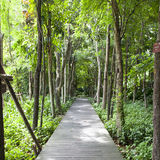 Wooden bridge in the park Stock Image