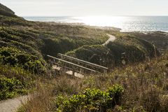 Wooden bridge on a path between bushes at dusk in Cape Perpetua Special Interest Area stock images