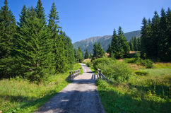 Wooden bridge and path in Carpathian mountains, Czech Republic Royalty Free Stock Photo