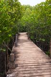 Wooden bridge for a path through the natural mangrove forest, for the natural background stock photo