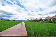 Wooden bridge path into rice field and background is huts Stock Photos