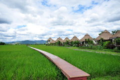 Wooden bridge path into rice field and background is huts Royalty Free Stock Photography